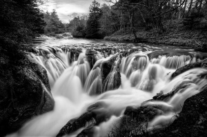 Rivers of Life Flowing