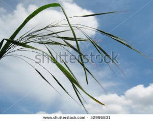 A Bending Reed
