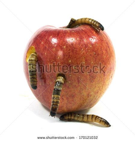 Sin & A Rotten Apple