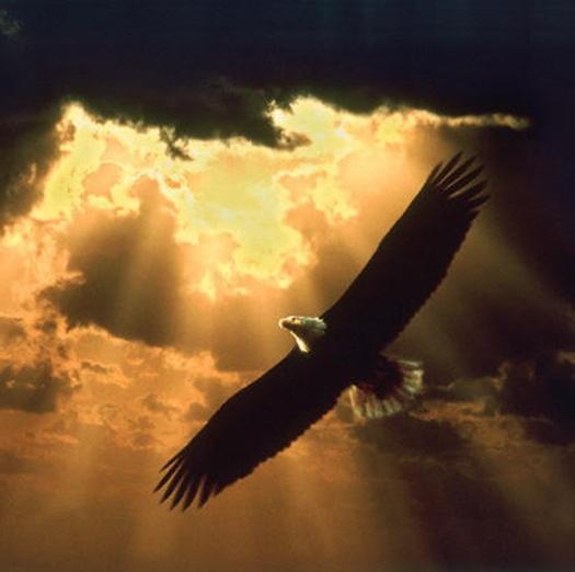 soaring_eagle_15012